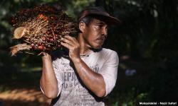 Najib: Oil palm smallholders losing out with plummeting prices
