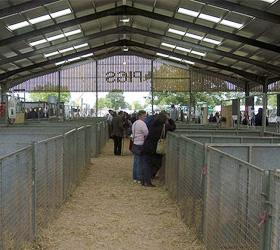 pig farming 080408