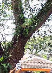 perak govt state crisis 030309 rain tree