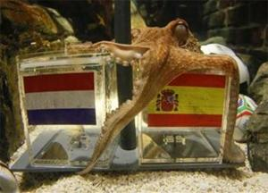 Paul the octopus proven with his spot-on predictions of World Cup 2010 matches.