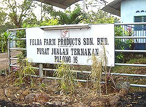 felda cow cattle rearing centre palong 120206 signage