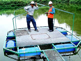 bukit koman anti cyanide 070807 penjom fish platform